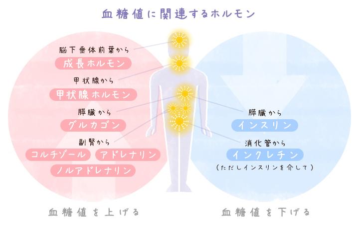 血糖値に関連するホルモン