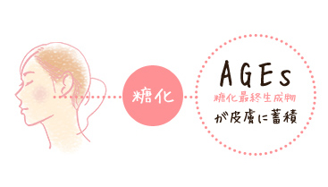 AGEs 糖化最終生成物が皮膚に蓄積