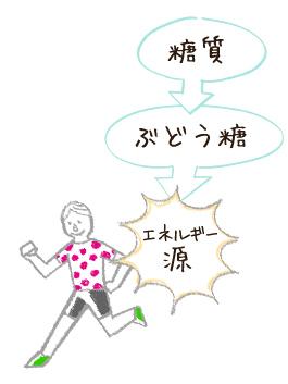 糖質→ブドウ糖→エネルギー源
